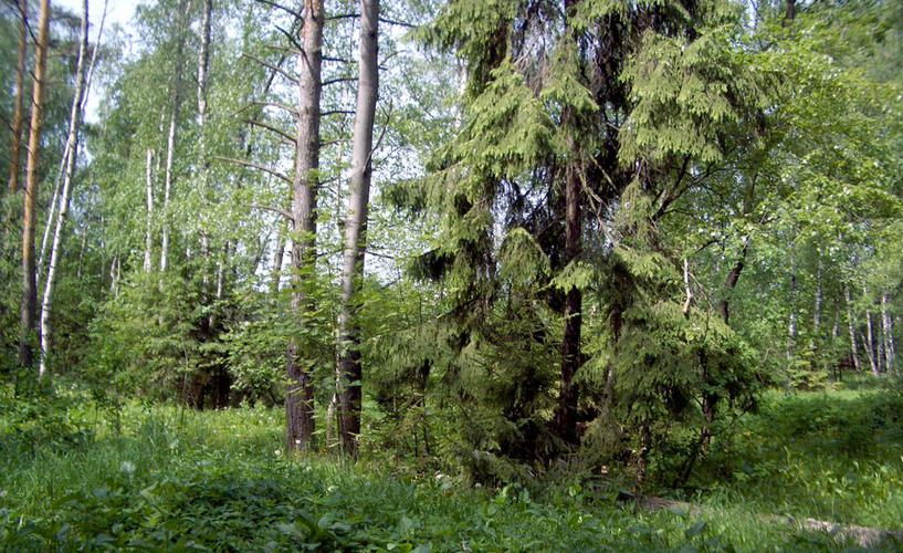 Участок Лесной ручей 4, id ls0500201, фото 2
