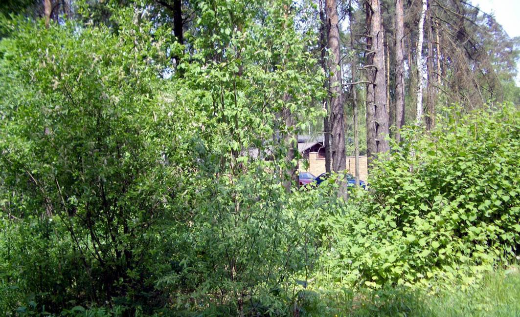 Участок Лесной ручей 4, id ls0500201, фото 1