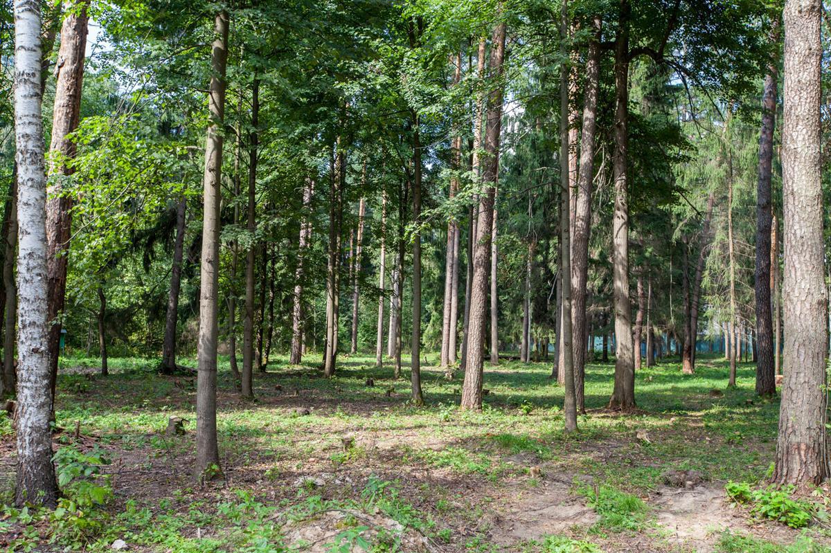 Участок Лесной ручей 4, id ls0500203, фото 1
