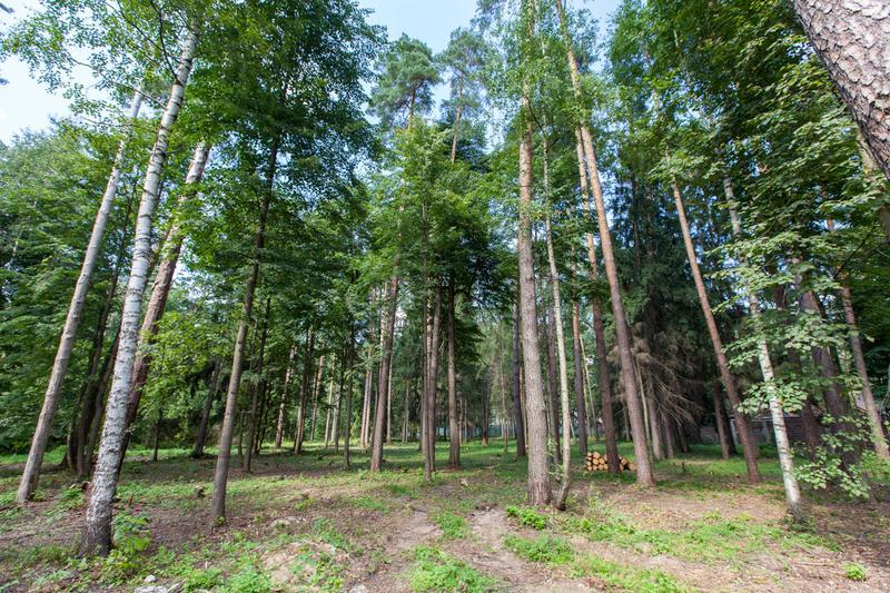Участок Лесной ручей 4, id ls0500204, фото 1