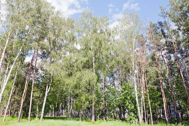 Участок Переделкино, id ls0500924, фото 1