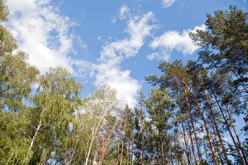 Участок Горки 8, id ls1101010, фото 1