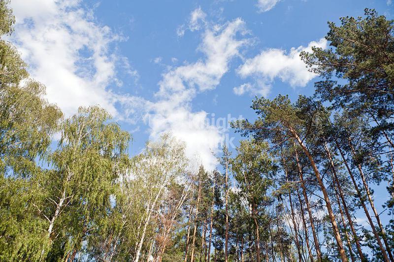 Участок Горки 2, id ls1101016, фото 3