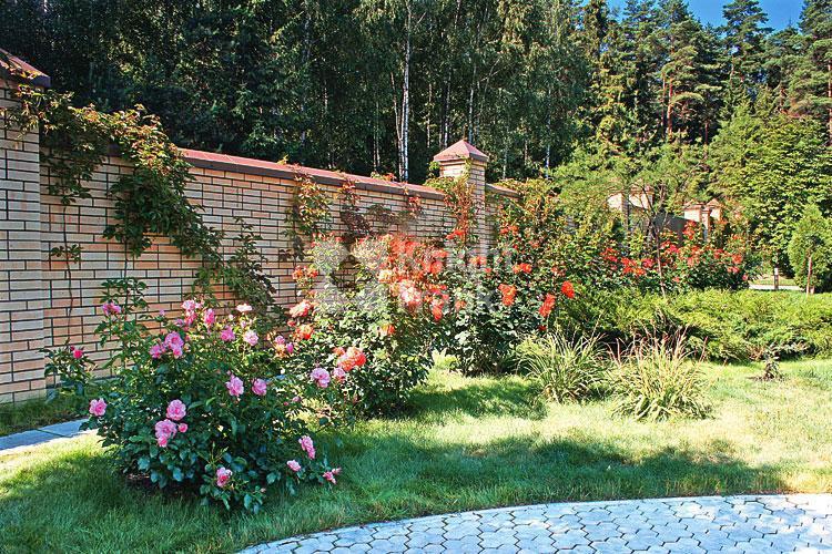 Дом Золотой ранет, id hs1201101, фото 5
