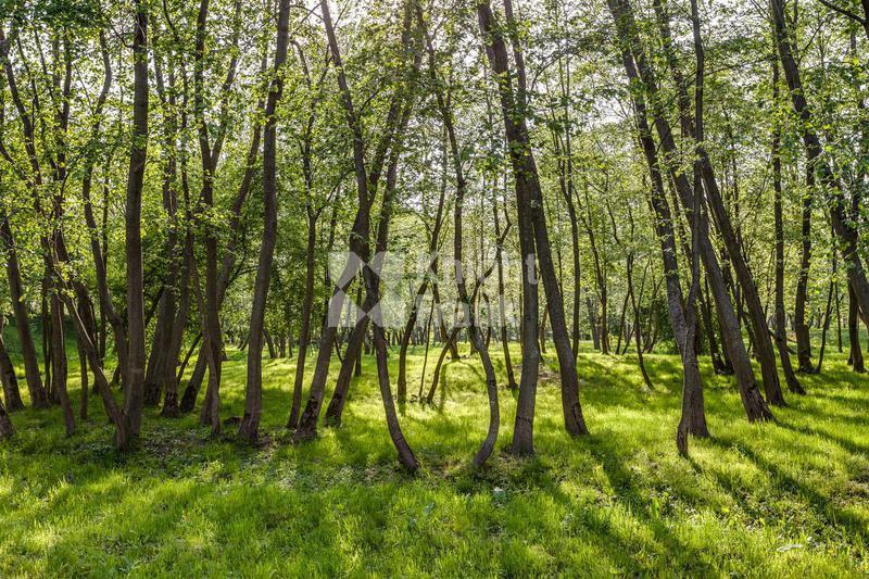 Участок Резиденции Бенилюкс, id ls1301921, фото 1