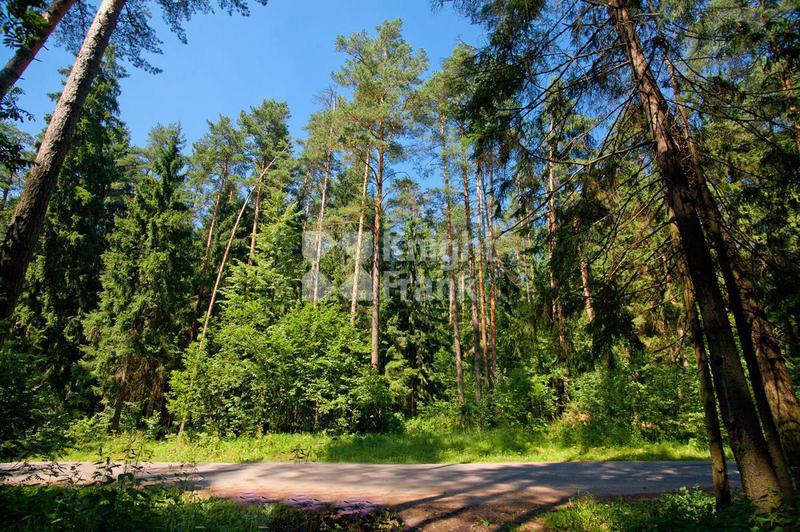 Участок Лесные Дали М, id ls1305204, фото 1