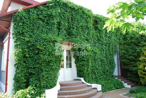 Дом Ильинское, id hs1311602, фото 2