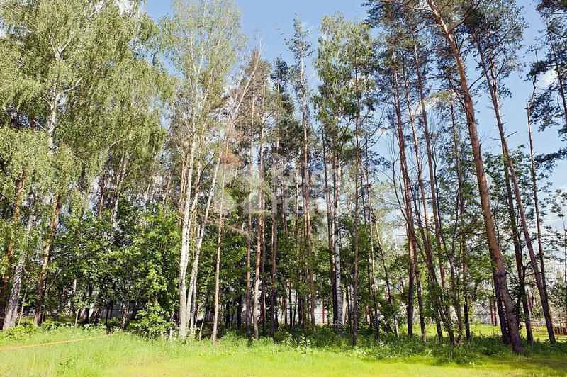 Участок Павловский лес, id ls1411602, фото 1