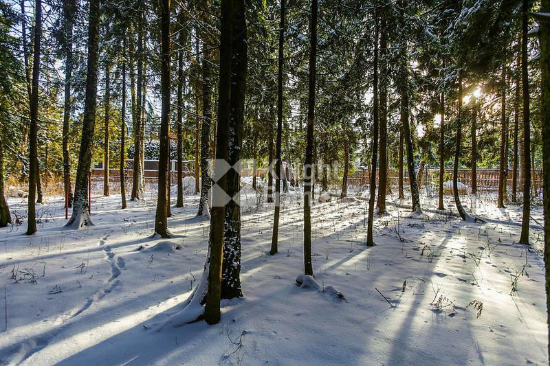 Участок Успенский лес, id ls9909626, фото 2