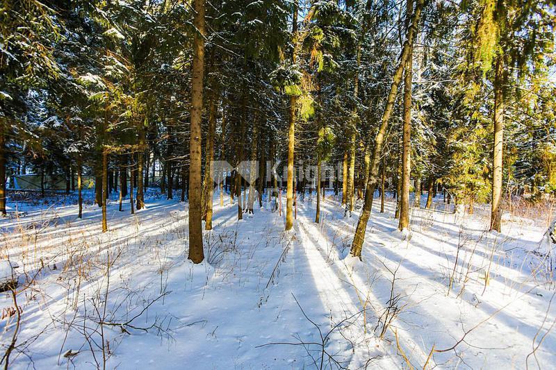 Участок Успенский лес, id ls9909626, фото 1