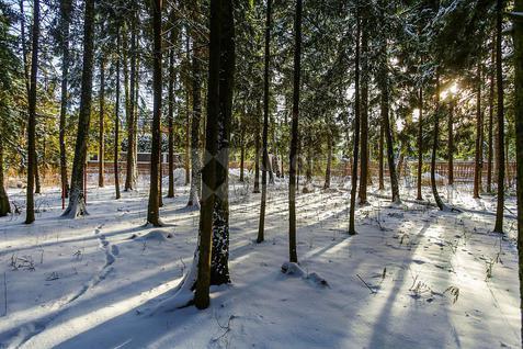 Участок Успенский лес, id ls9909626, фото 4