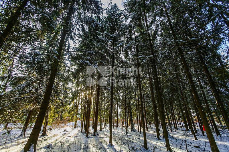 Участок Лесной Простор 3, id ls9909628, фото 2