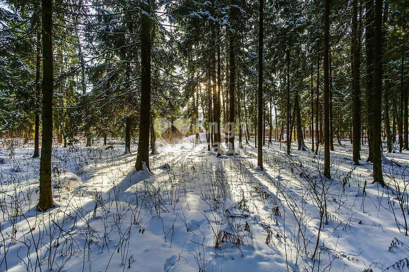 Участок Лесной Простор 3, id ls9909628, фото 1